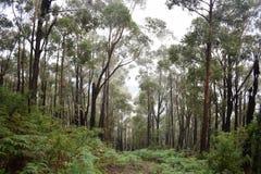 Abajo colina Forest Path Imagen de archivo
