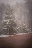 Abajo del camino de tierra Fotografía de archivo libre de regalías