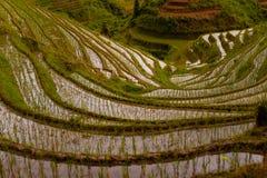 Abajo empape la terraza inundada Titian Longji del arroz Fotos de archivo libres de regalías