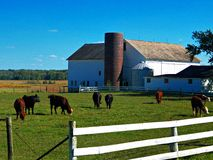 Abajo en la granja Fotos de archivo libres de regalías