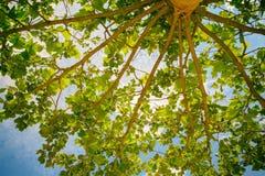 Abajo encima de los árboles de la visión que suben para arriba en el cielo soleado Fotos de archivo