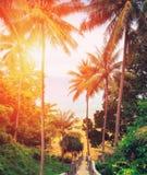 Abajo escaleras de madera a la playa en la puesta del sol Playa de Naithon, Phuket Foto de archivo