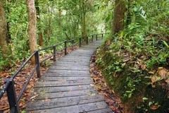 Abajo escaleras en la montaña Fotografía de archivo