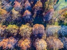 Abajo la antena recta sobre árboles del invierno broncea y cayendo sus filas de las hojas y filas Fotografía de archivo libre de regalías