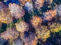 Abajo la antena recta sobre árboles del invierno broncea y cayendo sus filas de las hojas y filas Fotos de archivo libres de regalías