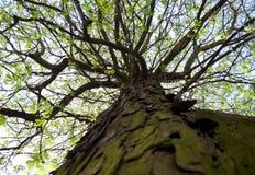 Abajo para arriba, árbol Foto de archivo libre de regalías