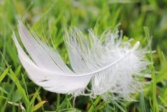 Abajo pluma en la hierba Fotografía de archivo
