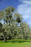 Abajo por el árbol de roble viejo Fotos de archivo