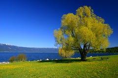 Abajo por el lago Imagenes de archivo