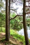 Abajo por el lago tomamos un paseo Fotografía de archivo