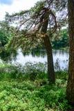 Abajo por el lago tomamos un paseo Fotos de archivo libres de regalías