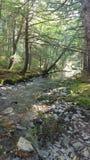 Abajo por el río Fotos de archivo