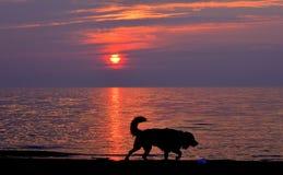 Abajo por la playa del perro Fotos de archivo