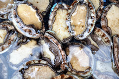 Abalone stock images