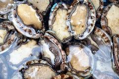 abalone arkivbilder