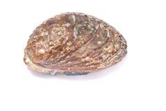 abalone Стоковое фото RF