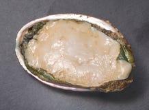 abalone Стоковые Фотографии RF