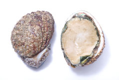 Abalone Stock Photography
