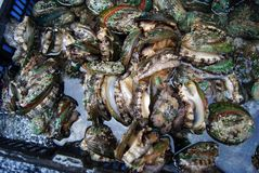 Abalone Royalty Free Stock Images