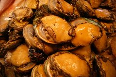 abalone Arkivfoto