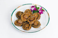 Abalone Royalty Free Stock Photography