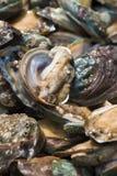 Abalone i den vatten- produktmarknaden Arkivfoto