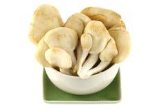 Abalone Mushroom isolated on white Stock Image
