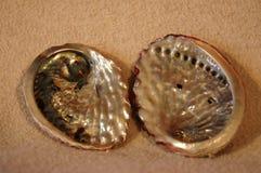Abalone overzeese shells van Zuid-Afrika stock fotografie