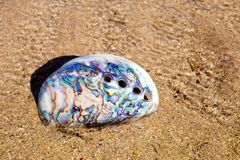 Abalone - Paua Shell on beach royalty free stock photography