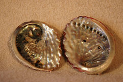 Abalone sea shells. Two empty sea shells of endangered Abalone or Perlemoen - (Haliotis midae) from the Indian Ocean in South Africa on beige fabric background Stock Photography