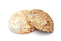 Abalone sea shells Stock Photos
