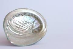 Abalone Shell Zdjęcia Stock