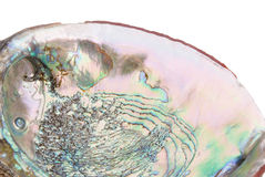 Abalone shell inside Royalty Free Stock Photo