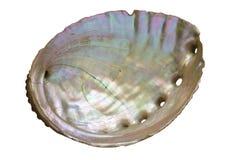 Abalone Shell Inside Fotografering för Bildbyråer