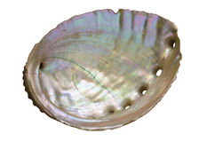Abalone Shell Inside Stock Image