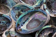 Abalone shells Royalty-vrije Stock Foto's