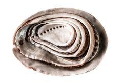 Abalone shells Royalty Free Stock Photos