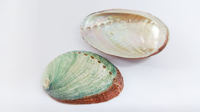 Abalone shells. Royalty Free Stock Images