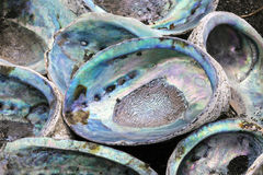 Abalone Shells Royalty Free Stock Photography
