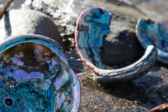 Abalone shells on the Northern California coast Stock Photo