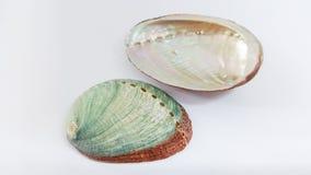 Abalone skorupy Obrazy Royalty Free
