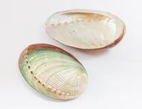 Abalone skorupy Zdjęcia Stock