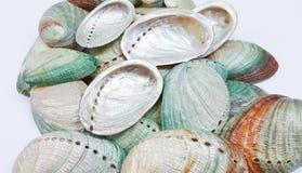 Abalone skorupy Fotografia Stock