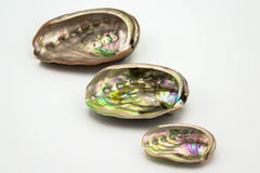 Abalone skorupy obraz royalty free
