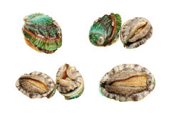Abalones. Raw abalones on the white background Royalty Free Stock Photo