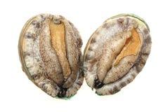 abalones Royaltyfria Bilder