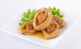 abalones Kinesisk kokkonstabalone på bakgrund Royaltyfri Foto