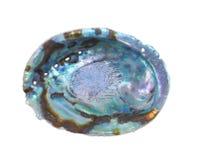 abaloneskal Arkivfoton