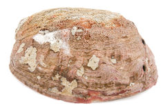 abaloneskal Fotografering för Bildbyråer