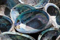 Abaloneskal Royaltyfri Bild